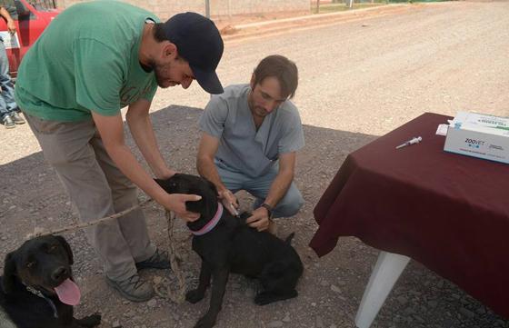 En Moldes se vacunó y desparasitó a 85 mascotas